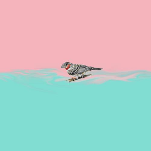 cln-owls